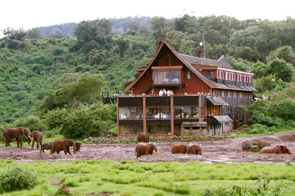 Consider taking this safari kenya wildlife safari for a memorable experience