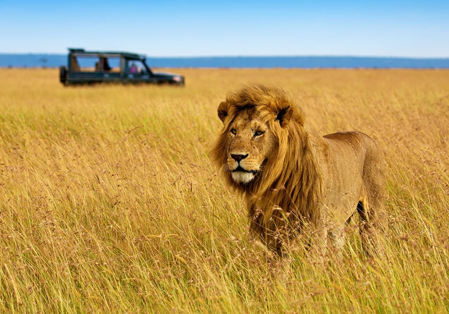 6 Days Lake Nakuru Masai mara Amboseli Tsavo west safari from nairobi