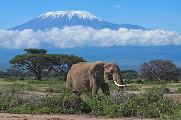 Amboseli Tsavo West safari / Nairobi road safaris