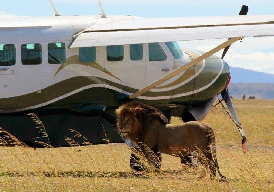 Masai 2 Days Mara air safari package
