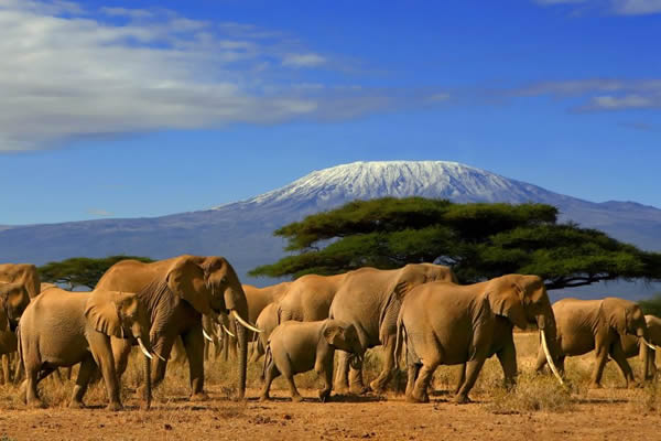 4 days Tsavo east-west-amboseli safari