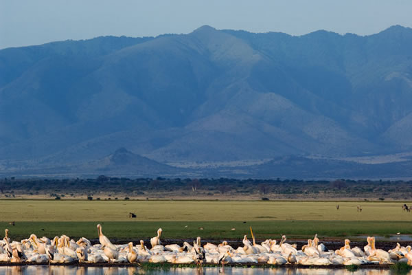 Lake Lake Manyara Safari lasting for 3 days by eastern vacations tours.