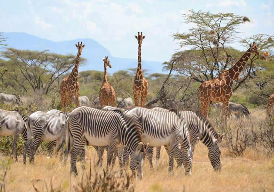 1 Day Tsavo East Safari wildlife