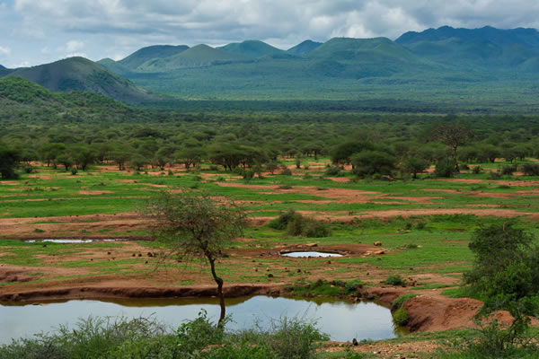 4 Days Safari Tsavo East West Amboseli tour -nature and wildlife safari