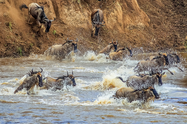 Lake Nakuru Masai Mara Amboseli Safari -by eastern vacations tours limited