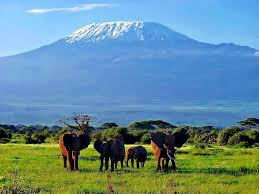 Amboseli national park - best safari destination
