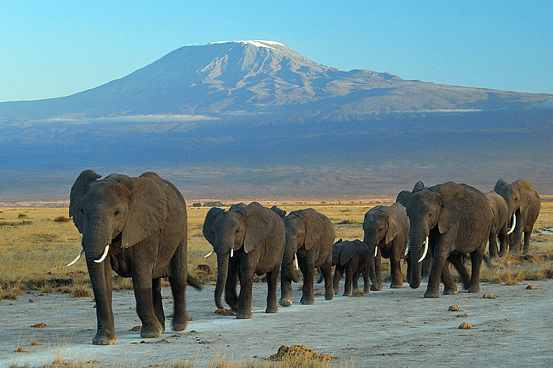 Amboseli Safari in Kenya - 3 days from Nair