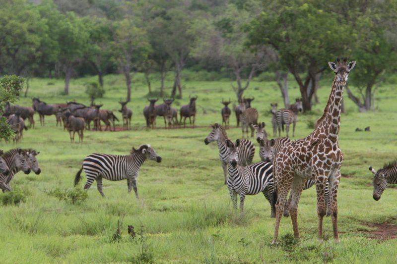 Lake Naivasha National Park - Best safari destination