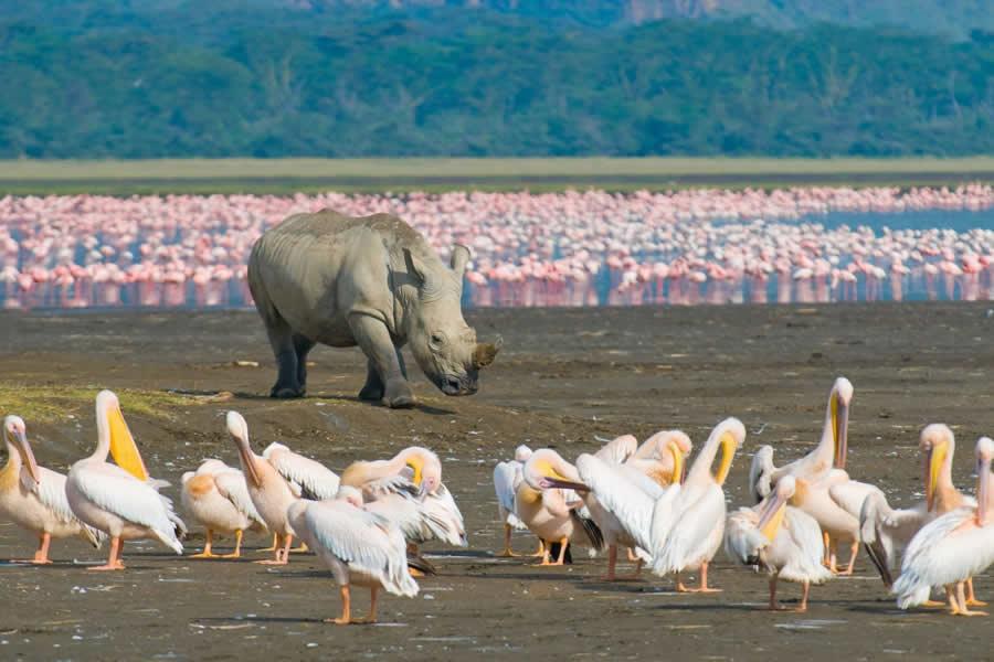 Lake Nakuru National Park safaris on offer