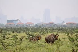 Nairobi National Park tours are the best for those who do not have enough time to make longer tours