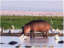 Lake Naivasha National Park is a paradise of bird watching