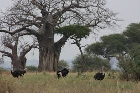 Tarangire national park by eastern vacations tours