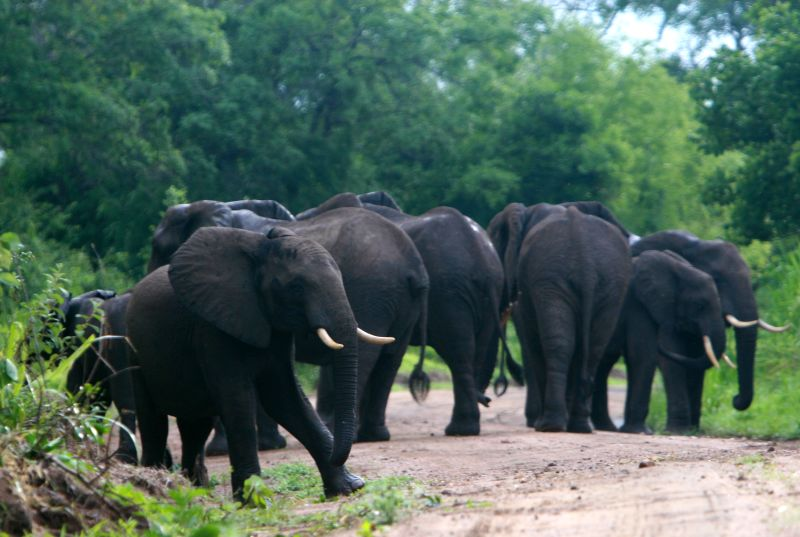 Tsavo East Salt lick Safari -2 days wildlife oftenly seen while on this safari.