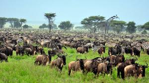 Mombasa Air Safaris with eastern vacations tours