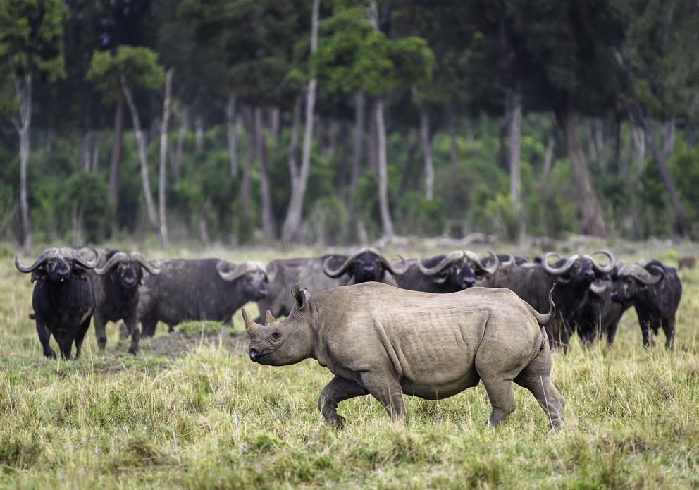 6 days mombasa safari