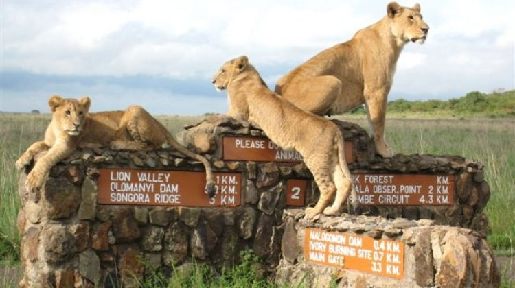Nairobi National Park Safaris on Offer