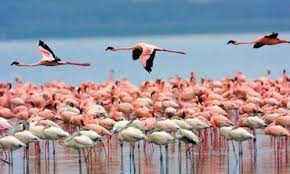 Lake Nakuru national park - Eastern vacations /nairobi safari packages