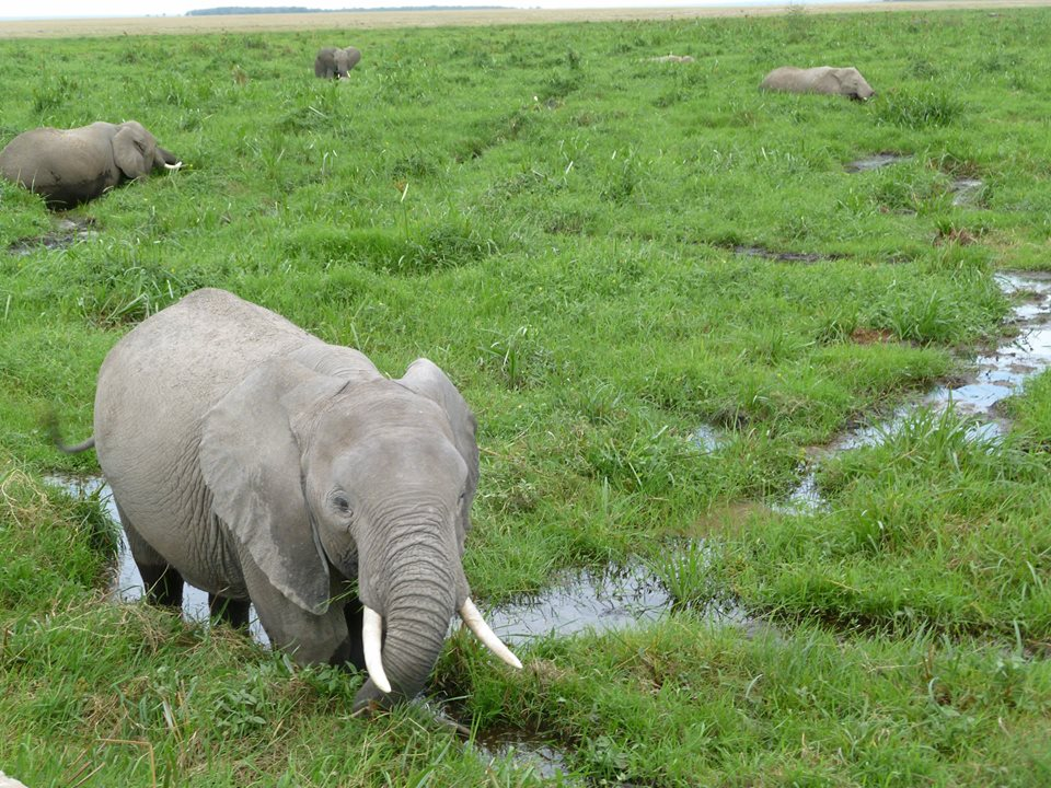 Tsavo West Amboseli Safari /nature & wildlife safari