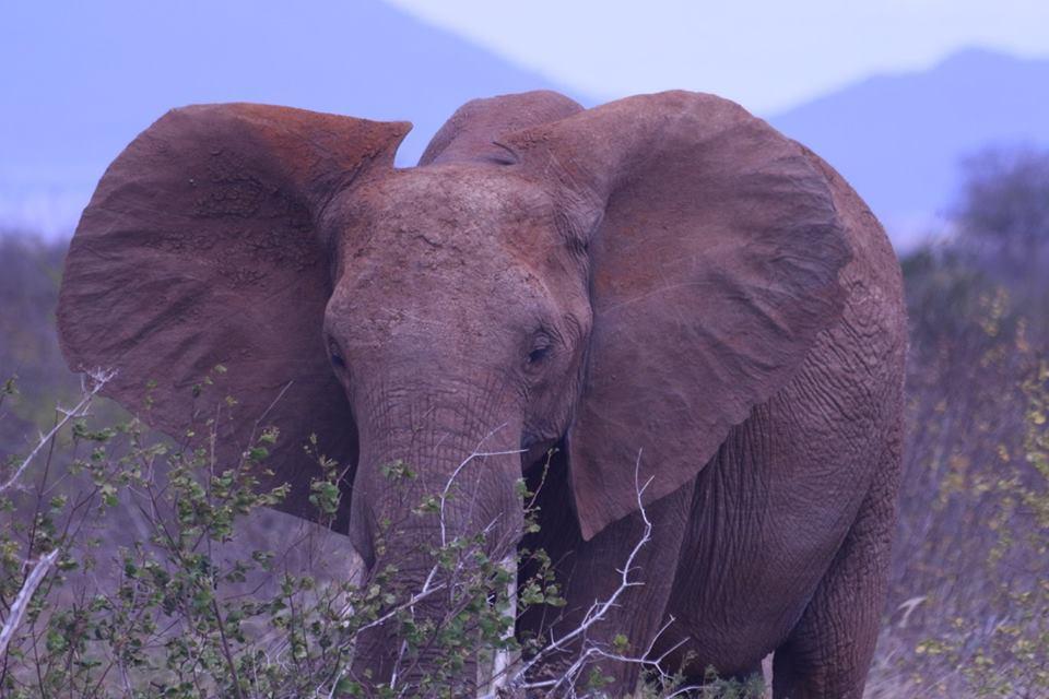 Kenya Classic Safari Tour -Kenya beach safaris