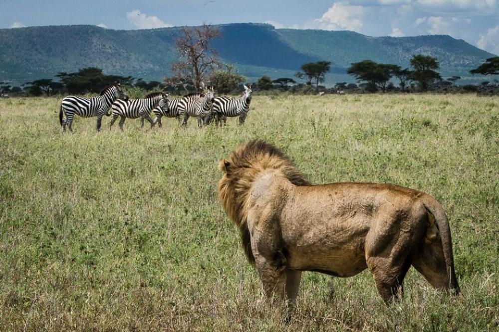 Kenya Wildlife Safari Holiday on offer