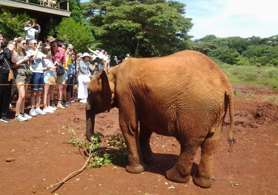 Daphne Sheldrick elephant orphanage in Nairobi