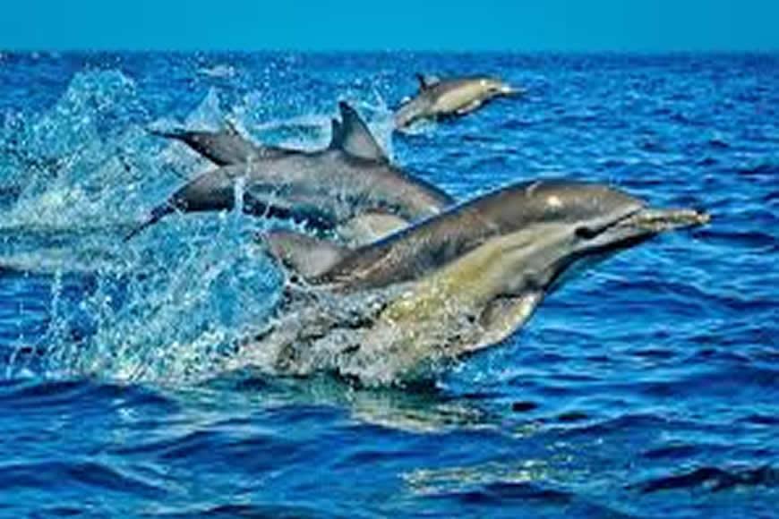 Wasini Island Dolphin Tour from Mombasa & Diani