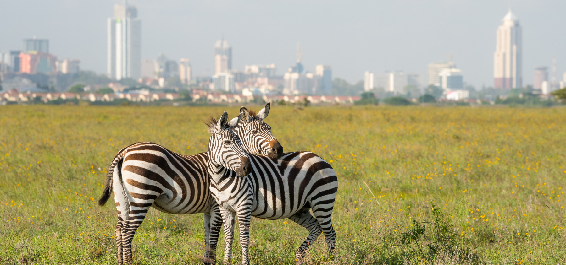 Nairobi National Park Tour in half day