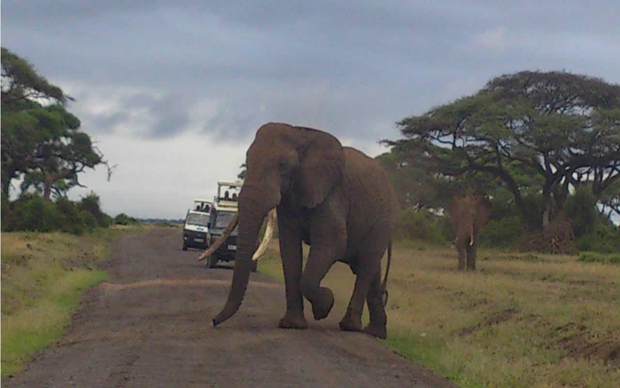 mombasa-road-safaris