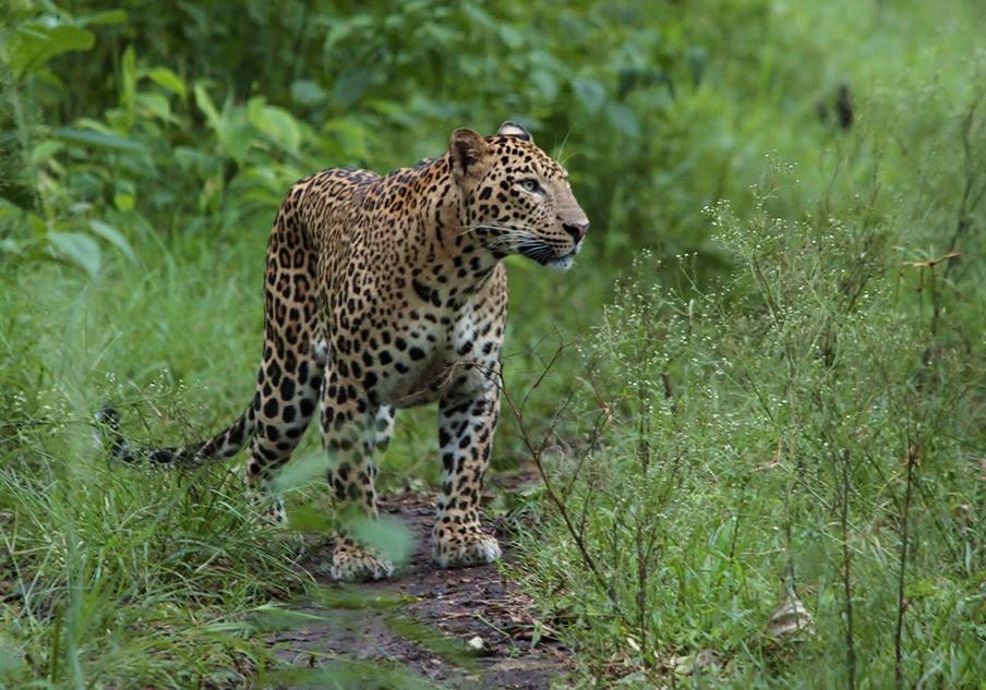2 Days Tsavo East-West - safari